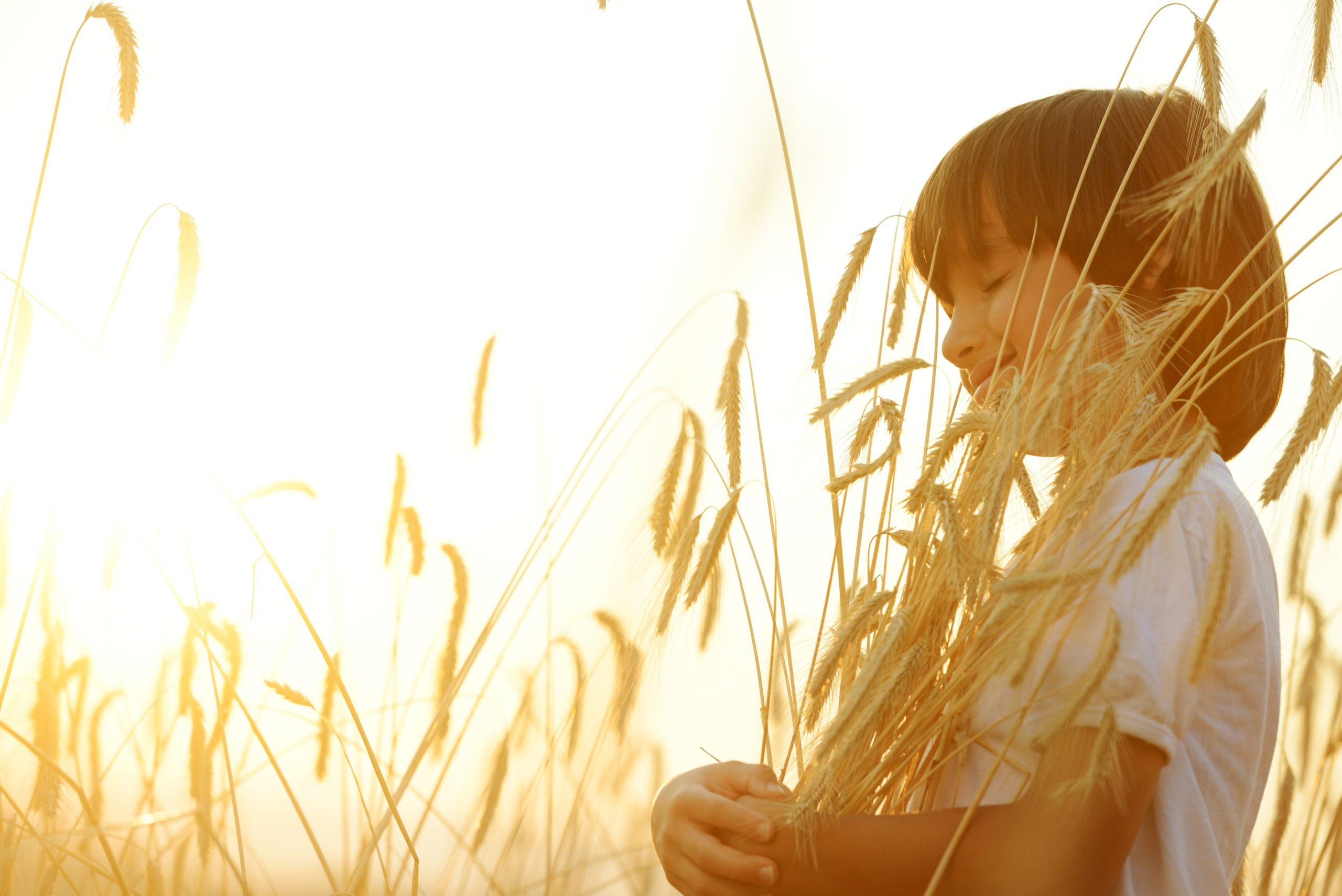 boy in wheat field with sun shining brightly